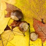 листья граници Стоковые Фотографии RF