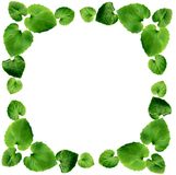 листья граници Стоковое Изображение RF