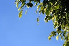 листья граници Стоковая Фотография