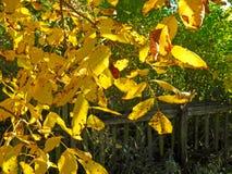 Листья грецкого ореха Стоковое фото RF