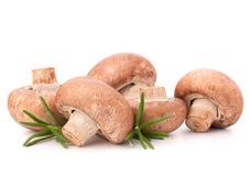 Листья гриба и розмаринового масла champignon Брайна Стоковое Фото