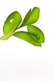 листья гусеницы зеленые Стоковое Изображение RF