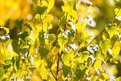 Листья дерева в осени Стоковое Изображение RF