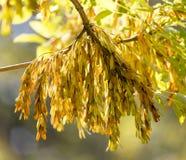 Листья дерева в осени Стоковые Фото