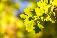 Листья дерева в осени Стоковая Фотография RF
