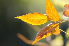Листья дерева в осени Стоковая Фотография