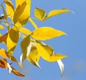 Листья дерева в осени Стоковое Фото