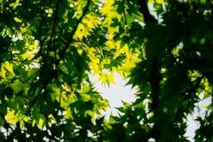 Листья дерева в природе Стоковое фото RF