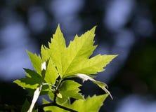 Листья дерева в природе Стоковое Фото
