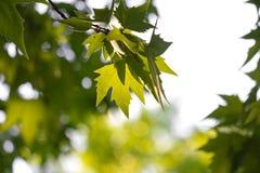 Листья дерева в природе Стоковое Изображение RF