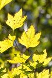 Листья дерева в природе Стоковые Изображения RF