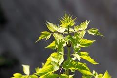 Листья дерева в природе Стоковые Фото