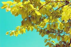 Листья дерева над голубым небом Стоковое Изображение RF