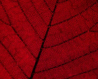 листья детали осени стоковая фотография