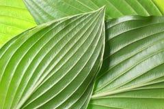 листья детали предпосылки Стоковые Изображения
