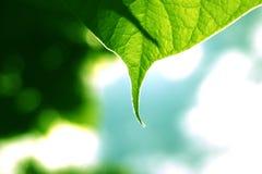 листья детали стоковое изображение rf