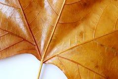 листья детали стоковые фото