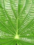 листья детали Стоковые Изображения RF