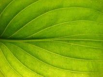 листья детали Стоковое фото RF