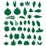 Листья для сети Стоковое фото RF