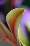 листья дня lilly стоковые изображения