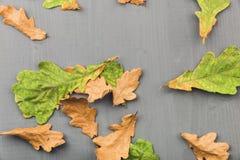 Листья дуба на деревянной серой предпосылке сток-видео