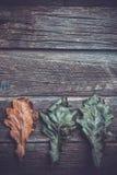 листья дуба осени в ряд, стоковые фотографии rf