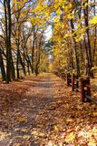 Листья лежа на дороге Стоковое Фото