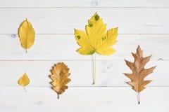 Листья дерева на белой деревянной предпосылке графический символ положения квартиры Стоковое фото RF