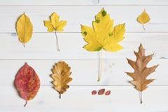 Листья дерева на белой деревянной предпосылке графический символ положения квартиры Стоковая Фотография