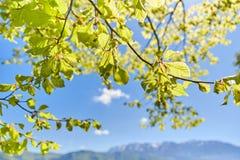 Листья дерева на озере Attersee Стоковые Фотографии RF