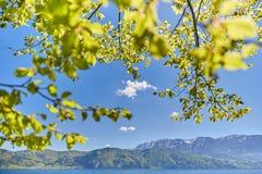 Листья дерева на озере Attersee Стоковая Фотография RF