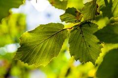 Листья дерева подробно Стоковые Изображения