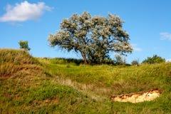 Листья дерева яркие Стоковые Изображения RF