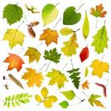 Листья дерева Стоковая Фотография