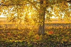 Листья дерева Bolton падая Стоковая Фотография
