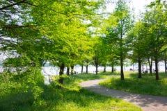 Листья лета в парке Стоковое Фото