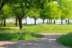 Листья лета в парке Стоковая Фотография