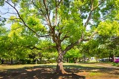 Листья лета в парке Стоковые Фотографии RF