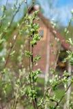Листья детенышей на ветви Стоковая Фотография