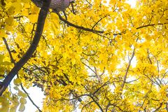 Листья желтого цвета в сезоне осени стоковые фото