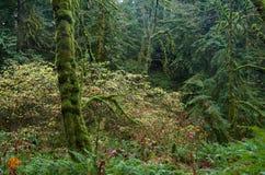 Листья желтого цвета комплекта кустов с зеленого цвета мха покрыли деревья Стоковое Изображение