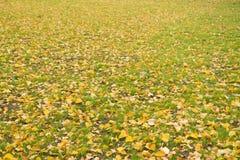 Листья желтого цвета на зеленой траве Упаденные листья осени на траве в солнечном свете Высушите листья Яркая свежая зеленая трав Стоковая Фотография RF
