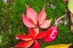листья желтого цвета на зеленом мхе Стоковые Изображения RF
