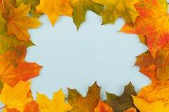 Листья желтого цвета на листах покрашенной бумаги Стоковые Изображения RF