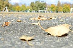 листья желтого цвета на мостоваой Стоковое Изображение