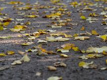 Листья желтого цвета осени лежа на том основании стоковые изображения rf