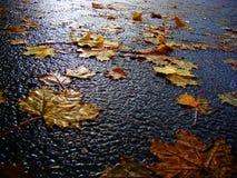 Листья желтого цвета осени на влажном асфальте Стоковые Изображения RF