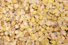 Листья желтого цвета стоковая фотография rf
