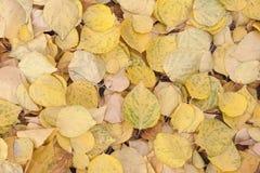 Листья желтого цвета стоковая фотография